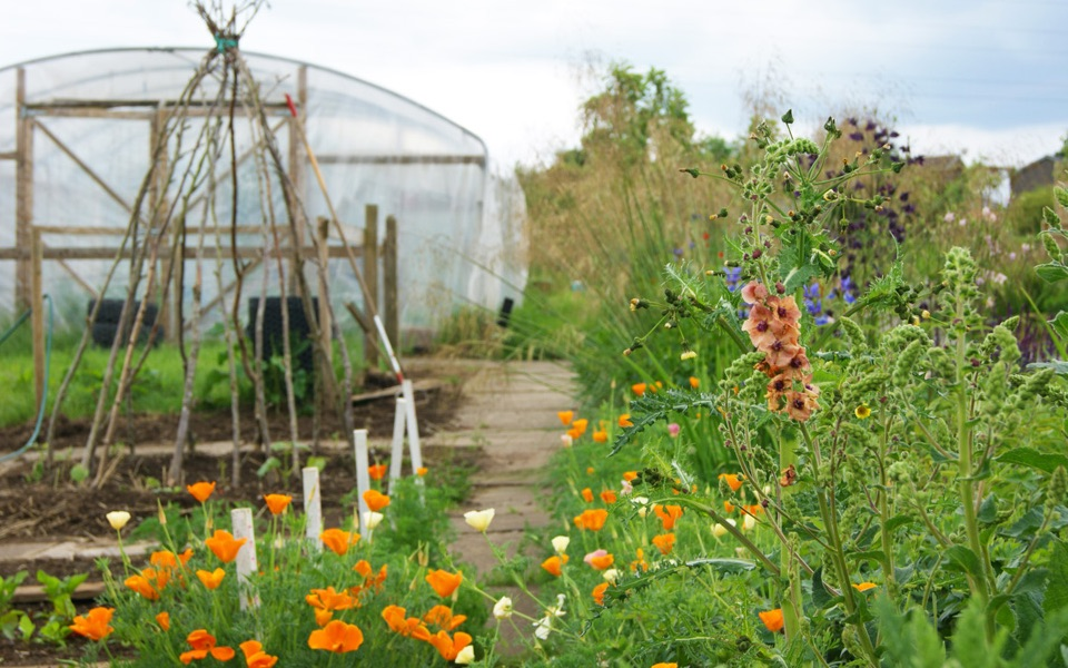 Kitchen Garden | Overthorpe